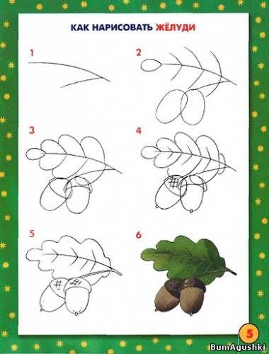 Как нарисовать жёлуди